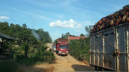 convoy of fleet transport crude palm oil
