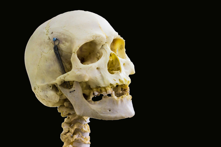 articulated human skull bone and cervical vertebrae for head and neck anatomy in isolated black background with space for text Stock Photo