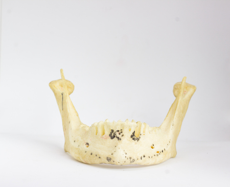 frontal view of isolated human mandible without teeth in white background with space for text