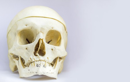 front anatomical view of human skull bone with mandible and the vault of the skull in isolated white background with space for text Stock Photo
