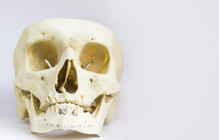 front anatomical view of human skull bone with mandible without the vault of the skull in isolated white background with space for text Stock Photo