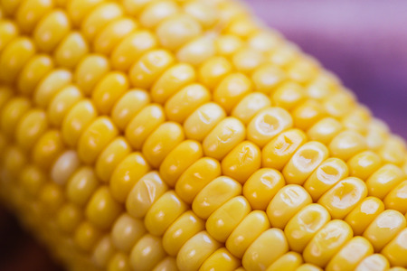 yellow corn stalk close up photo in wooden background Stock Photo