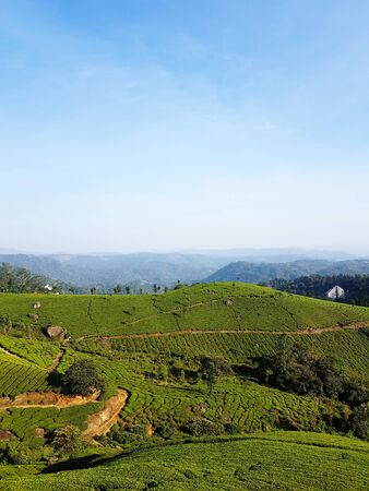 Landscape photo of tea garden at Munnar, Kerala, with blue sky and green wave of tea plantation on mountain slope