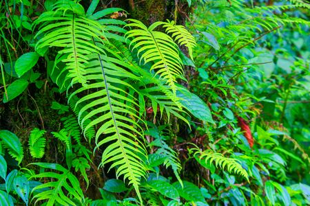 green fern and other plants and leaves vegetation on the walls of a rain forest