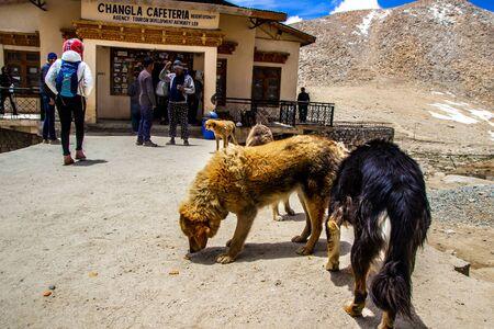Ladakh,India. 26-June 2016, Himalayan furry dogs and tourist near the cafetaria at Changla Pass at Ladakh, Kashmir, India. Redakční