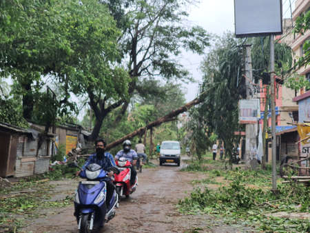 21st May 2020 - Narendrapur, West Bengal, India. Trees destroyed and fallen on road as pedestrians walk by as an aftermath of Cyclone Amphun that hit South Bengal on 20th May 2020.
