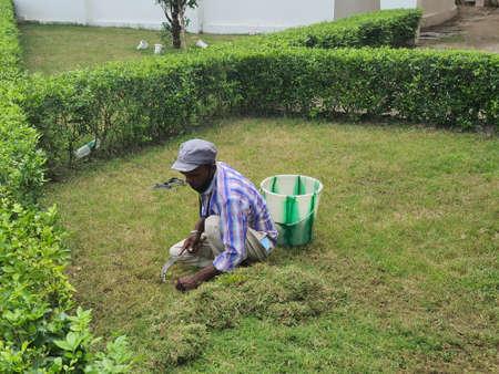 24 November, Kishanganj, Bihar, India- A gardener manually cutting grass with a sickle knife during day time to make the grass uniform level. Редакционное
