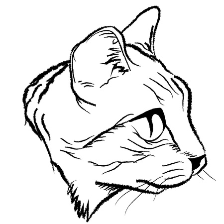 grey cat: Cat face drawing design by illustration