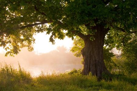 Oak tree in full leaf in summer standing alone 스톡 콘텐츠