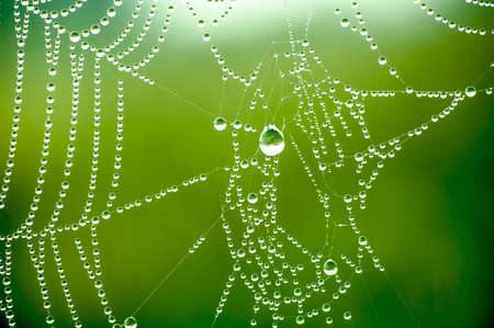 Spider net with water drops photo
