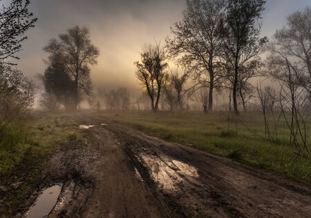woodland  horror: Foggy landscape with a  tree silhouette on a fog at sunrise. Stock Photo