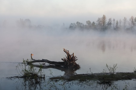 the mist over the River at dawn photo