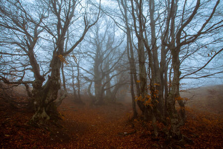 autumn landscape, trees in the mist at dawn photo