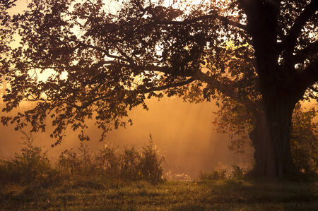 autumn landscape, trees in the mist at dawn. photo