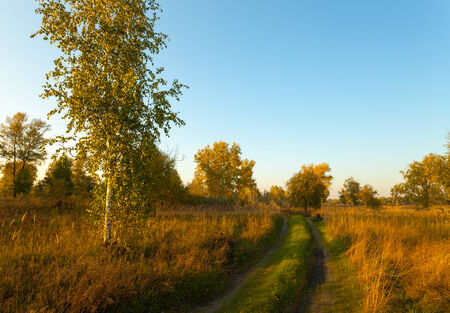 View on autumn landscape of  trees in sunny day. photo