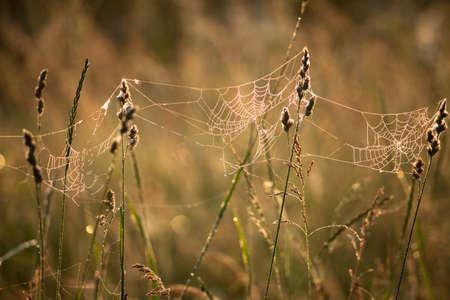spider net: Spider net with water drops, autumn landscape Stock Photo