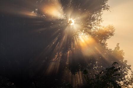 approfondi: les rayons du soleil arbres approfondies et des verts