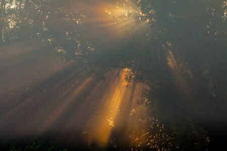 miracle leaf: the Sun beams thorough trees and greens Stock Photo