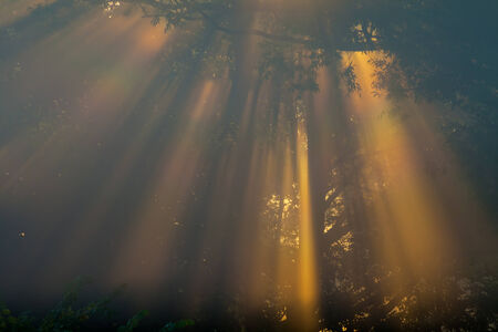 thorough: the Sun beams thorough trees and greens Stock Photo