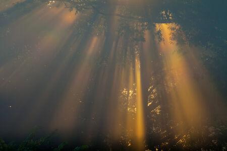 the Sun beams thorough trees and greens photo