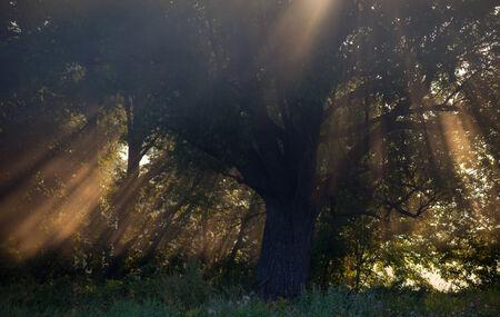 thorough: the Sun beams thorough trees and greens Stock Photo