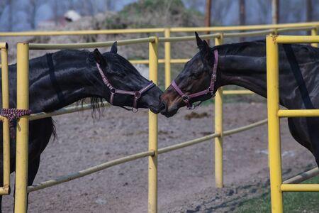 purebred horse photo