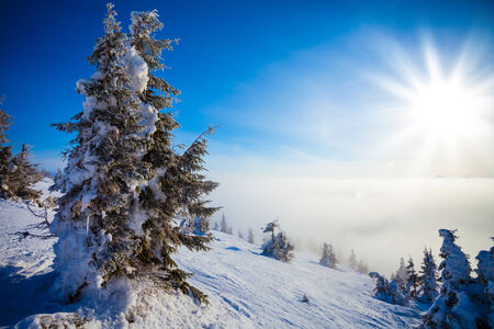 Trees covered with hoarfrost and a snow in mountains photo