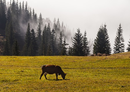 Fog covering the mountain forests, Ukraine, fall Stock Photo