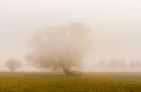 The beautiful fog on a river photo photo