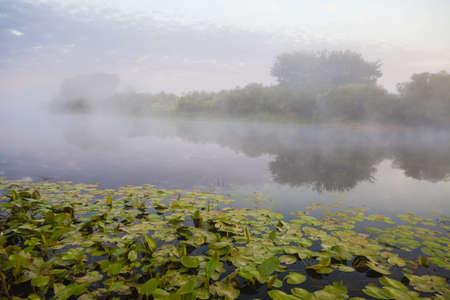 rushy: lake and green fields, fog, springe, sky