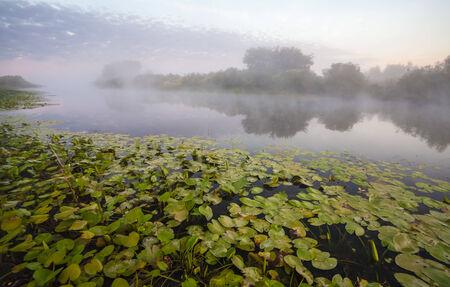 lake and green fields, fog, springe, sky photo