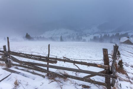 treeline: Clearing Snow Storm in the Rocky Mountains. Stock Photo