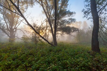 enters: Morning sun enters the deciduous forest surrounded by mist floating over the water. Stock Photo