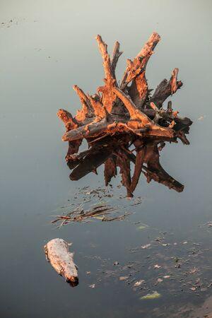 twiggy: Lake water and tree stumps. The Ukraine Stock Photo
