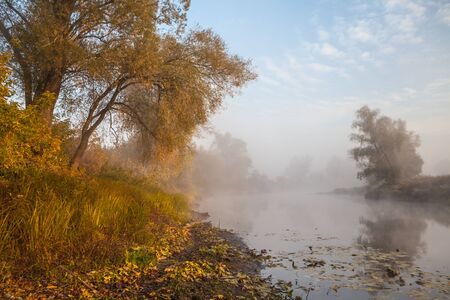 The autumn wood on the river bank, shined with the sun, fog over water, outdoors