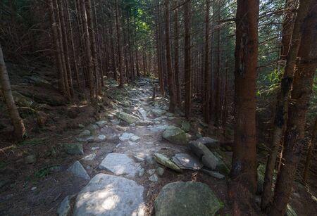lush: Trail through lush green forest in Ukraine