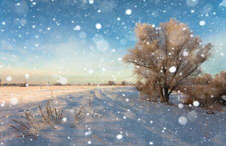 estado del tiempo: Hermoso paisaje de invierno con los �rboles cubiertos de nieve Foto de archivo