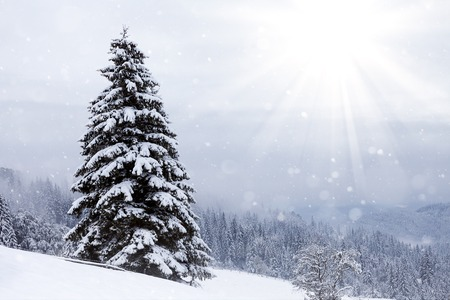 christmas scene: Beautiful winter mountains landscape with snowy fir forest.