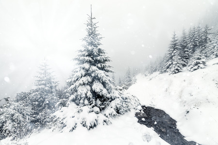 stellate: Beautiful winter mountains landscape with snowy fir forest.