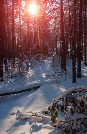 snowdrifts: Morning winter mountain landscape with trees on slope
