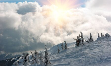 Fantastic landscape glowing by sunlight. Natural park. Carpathian, Ukraine, Europe. Beauty world. Happy New Year!