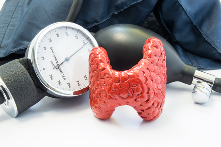 Thyroid and blood pressure. Anatomical model of thyroid gland is near sphygmomanometer with bulb and inflated cuff. Concept photo of effects of thyroid gland and its hormones on blood pressure level Standard-Bild