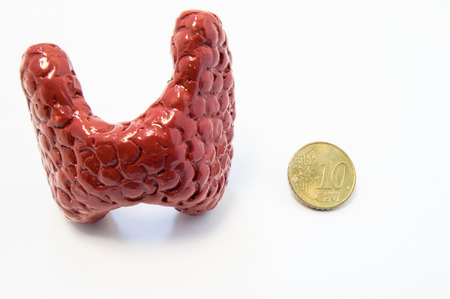 Concept of visualization of enlarged thyroid gland in various diseases, such as goiter, thyroiditis, nodule. Anatomical model of thyroid gland is located near 10 cent penny for size comparison of both Stock Photo