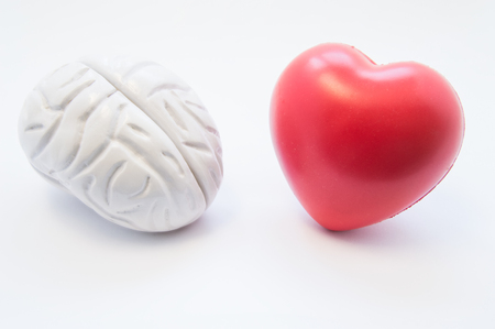 consistency: Heart and brain figures lie next to each other on white background. Visualization of connection between brain and heart, choice in love, coherence, cooperation in medicine and science, relationship