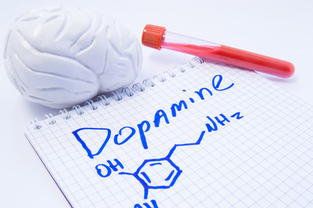Neurotransmitter Dopamine in brain. Anatomic 3D brain model, lab test tube with blood and note, where is written title of dopamine and formula. Concept for determine level of dopamine in human brain