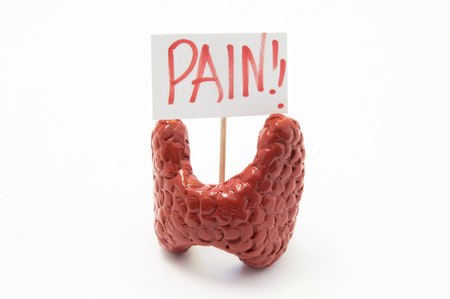 Anatomical model of thyroid gland with placard with inscription pain is on white background. Concept photo of pain, pain symptoms and syndromes in thyroid gland in various diseases and pathologies
