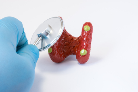 Hand of doctor in glove with stethoscope and 3D shape of parathyroid gland. Photos idea where surgeon or general practitioner conducts preoperative diagnosis or diagnosis of disease parathyroid gland
