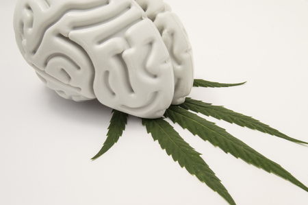 The figure of the human brain lies on a green leaf of hemp. The use of cannabis (Medical marijuana) in neurology or neuroscience (such as for pain relief). Marijuana dependence or addiction. Stock Photo