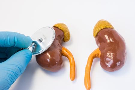 Hand van arts in handschoen met stethoscoop en 3D-vorm van nier. Foto's idee waar chirurg of huisarts preoperatieve diagnose of diagnose van nierziekte en bijnier uitvoert