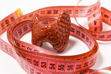 Measurement of thyroid as definition of symptom or sign of disease, e.g. enlarged thyroid. Thyroid model wrapped by measuring tape. Visualization symptom  of enlargement with goitre iodine deficiency